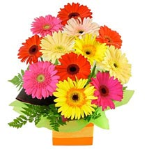 Gerberas presented in a Square Box: All Flowers