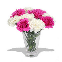 10 Pink n White Carnations in Vase: Thank You
