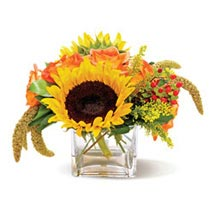 Country Sunflowers CND: Get Well Soon