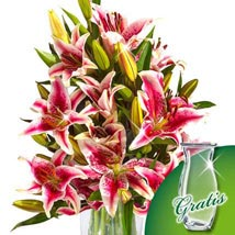 10 pink Stargazer Lilies in a bunch: Christmas Flowers Germany