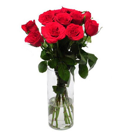 Rose Delight 12