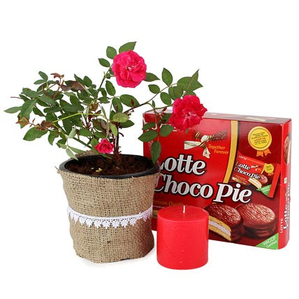 Rose plant and choco pie