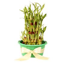3 layers Lucky Bamboo in Green Fiber Woven Basket: Plants for Mother's Day
