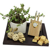 Harmonizing Space: House Warming Gift Hampers