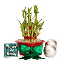 Lucky Bamboo Hamper For You: Feng Shui Gifts