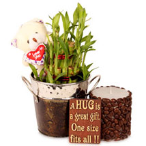 Lucky With Bamboo Hamper: Plants for Her