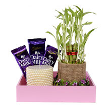 Pink Wooden Tray Combo: Good Luck Plants for Her