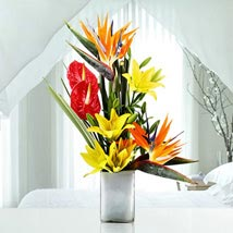 Soft Serenade: Valentines Day Special Lilies