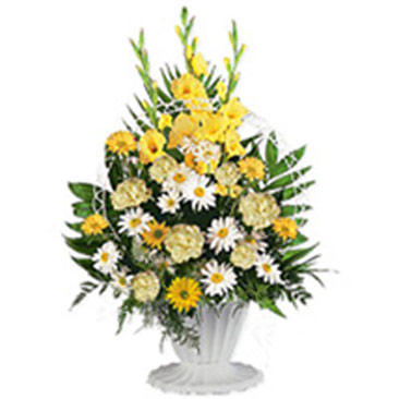 Sympathy Arrangement qat