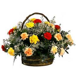 Rainbow Carnation Basket SA