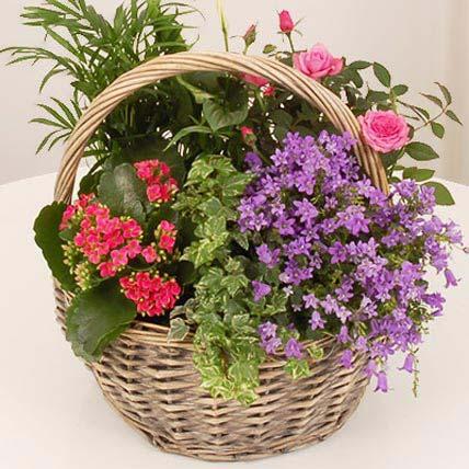 Indoor Luxury Basket