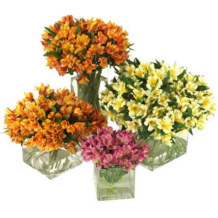 50 Peruvian Lilies