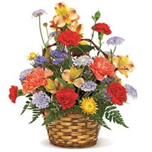 Carnival Of Color Flower Delivery In Usa
